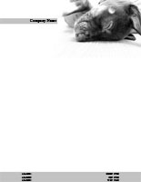Veterinary7 Letterhead